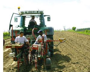 Arrachage des vielles vignes et plantation des jeunes vignes
